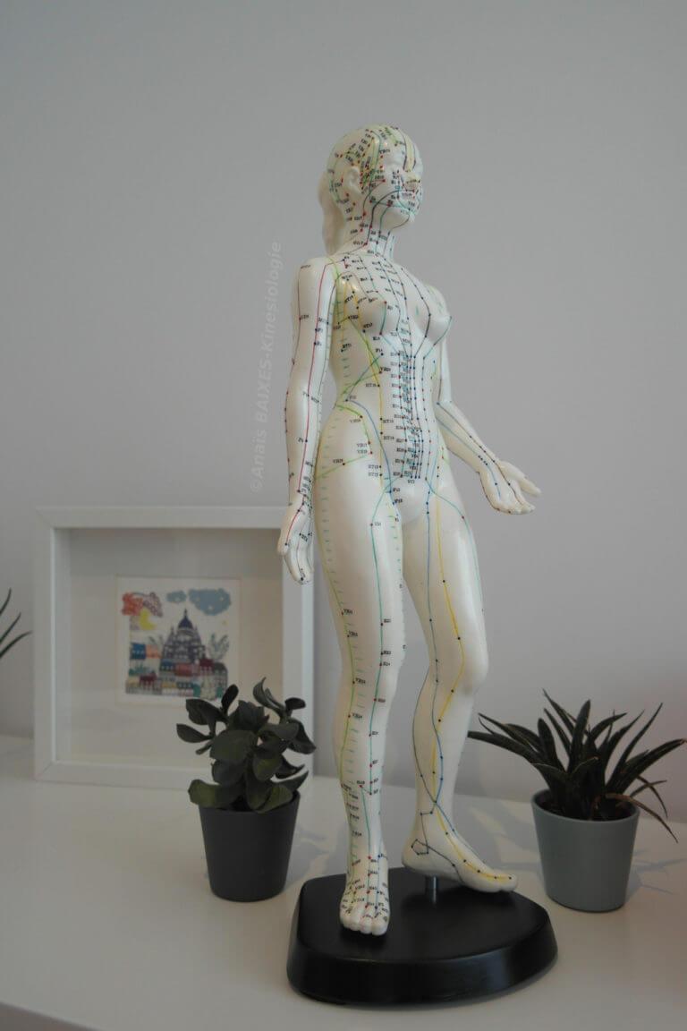 Mannequin d'acupuncture
