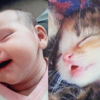 Bébés et attachement